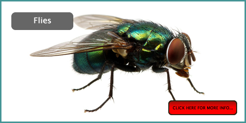 house fly pest control