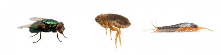 pest control for homes & gardens