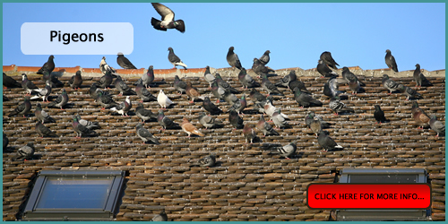 pigeon and bird pest control